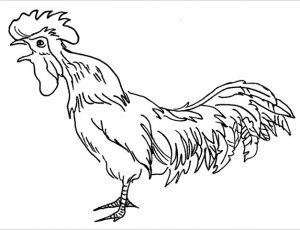 Heinz, der Hahn